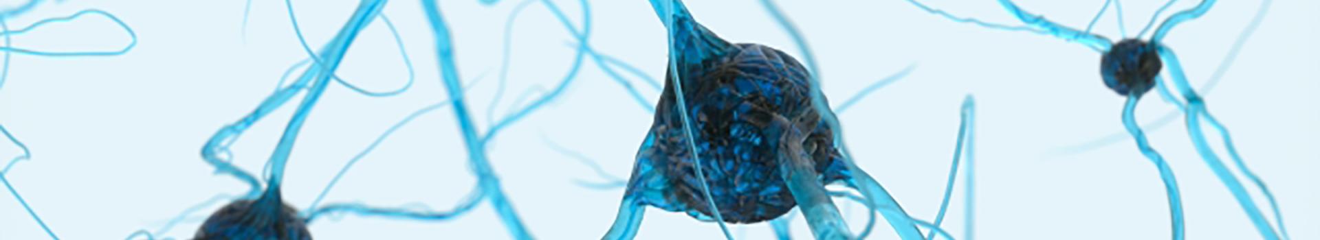 神経外科先端治療開発学分野